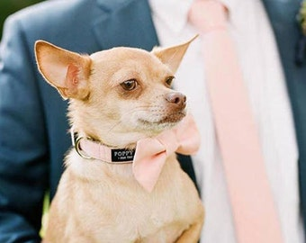 Blush Pink Dog Bow Tie - Optional Matching Leash and Collar - Dog in Wedding By Poppy Parker