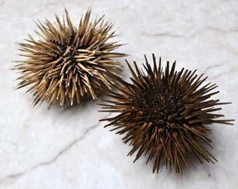 "Sea Urchin w/Spines (2 pcs.) - (2.5-3.5"") - Echinometra Mathaei"