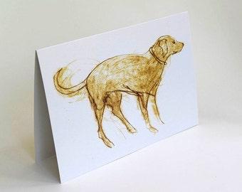 Card, Greeting Card, Dog, Chocolate Labrador, art card, dog art,  Bridget Farmer, Blank Card