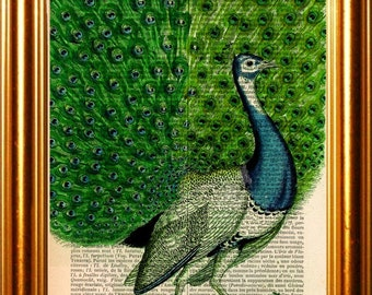 Peacock full tail print on vintage (1880's) upcycled french dictionary page mixed media digital print art