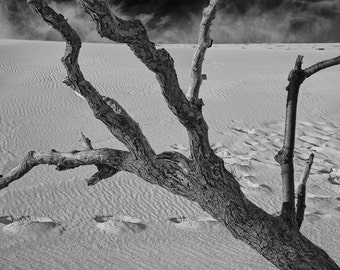 Footprints in the Sand and Dead Tree Branch at Sleeping Bear Dunes National Seashore by Lake Michigan A Black and White Fine Art Photograph