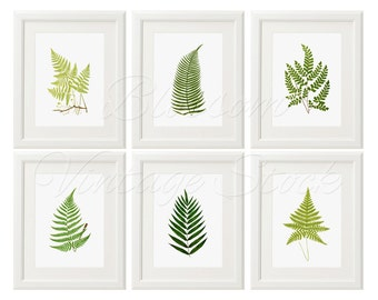 Botanical Printable Set Botanical Fern Leaves INSTANT DOWNLOAD Digital Vintage Illustrations for Print 5x7, 8x10, 11x14 Included - 1530