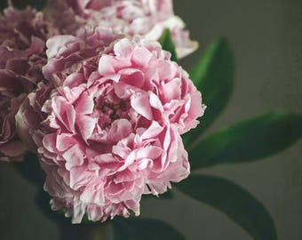 "Peony flower still life print - pink bedroom decor - romantic dark floral wall art - photography print ""Peony 15"""