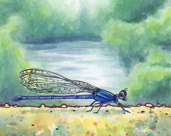 Down by the River - 9x9 - Damselfly Original Framed Watercolor