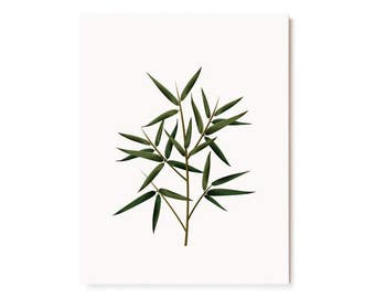 Botanical Scented Card - Bamboo