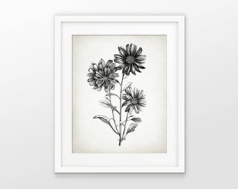 Antique Botanical Print - Aster Plant Illustration - Aster Flower - Aster Botanical Print - Drawing - Single Print #2102 - INSTANT DOWNLOAD