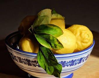 backyard lemons, 8x10 fine art color photograph