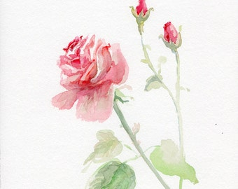 Rose painting, watercolor flower original, garden-lovers gift