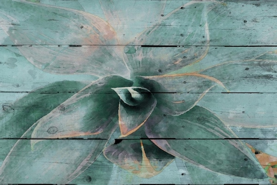 Succulent. Overlapping, gray-green.. Canvas Print by Irena Orlov