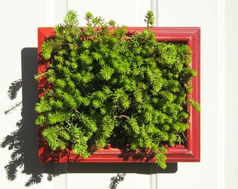 Vertical Planter Frame, FREE SHIPPING In USA! Vertical Gardening, Pallet  Planter, Pallet