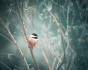 Bird Photo, Bird Art, Chickadee Photograph, Enchanted Forest Decor
