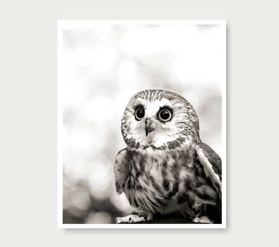 Cute owl photo owl print black and white owl photography