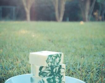 Eucalyptus Spearmint Shampoo Bars - No Palm - Vegan - 100% Natural