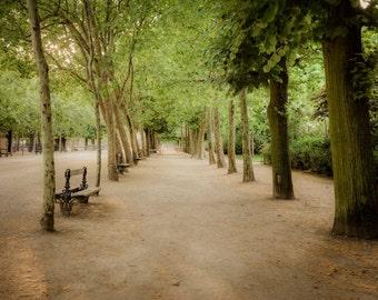 Paris Photography Luxembourg Garden Photo Park Photograph Spring Print Dreamy Trees Green  par58