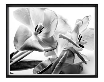 Tulips, Fine Art Photography, Home Décor, Wall Art, Free Shipping, Botanical, Studio Work, Abstract, Spring, Black and White Photography
