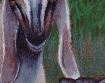 original art  aceo drawing goat and cat