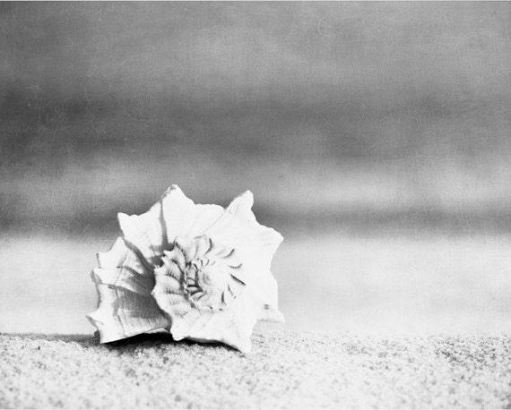 Black and white seashell photography beach sea shell wall