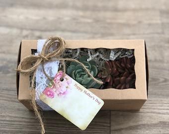 Succulent Plants - Succulent Gift Box (3)