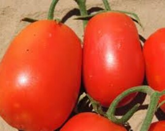 Rio Grande Tomato seeds