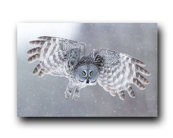 Owl Photo, Owl Print, Nature Print, Fine Art Print, Bird Picture, Bird Photography, Wall Art, Snow Angel, Angel, winter, Great Grey Owl