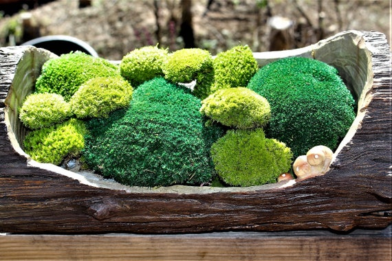 Preserved Moss Pillow Moss Cushion Moss NO WATER Needed Now By The PIECE Fairy  Garden Moss Wedding Moss From TeresasPlants On Etsy Studio