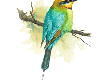 Rainbow Bee-eater, bird, colourful, bird paintings, limited edition