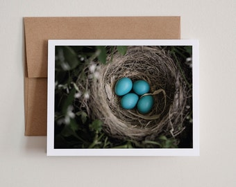 INSTANT DOWNLOAD / DIY Printable Notecards / Robin's Eggs / Blank Inside