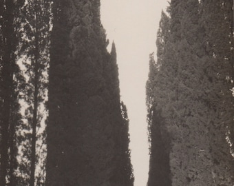 Cypress Garden - Original Antique Photo