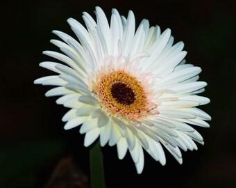 Nature Photography - One Singular Sensation - Flower, Floral, Travel, Botanical, Fine Art Phototgraphy