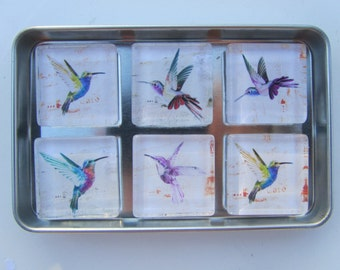 Hummingbird Refrigerator Magnets, Set of 6 Hummingbird Fridge Magnets in Storage Tin