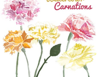 Watercolor Carnation Flower Clip Art for Scrapbooking Instant Download Digital Flowers Digital Clipart Commercial Use