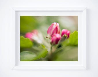 Botanical art - Spring print - Flower wall art - Pink and green decor - Nature photography - Floral print - Gifts for Moms - Photo gift