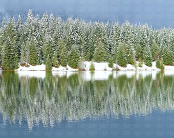 Winter Beauty A Line of Snow Covered Evergreen Trees on Shore of an Alpine Lake and Snow on Ground Reflected on Calm Water 8 X 10 Glossy