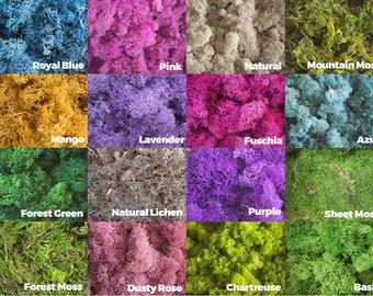 Preserved Moss, Reindeer Moss, Dried Moss, Terrarium Moss, Colorful Moss, Sheet Moss, Lichen, Purple Fairy Garden Forest Moss Vase Filler