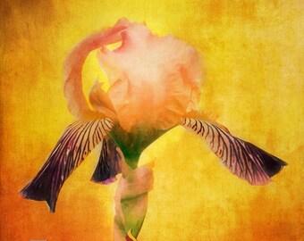 Flower Art, Iris Photography, Iris Wall Art, Botanical Spring Floral, Yellow Wall Art, Flower Photography, Home Decor