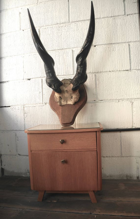 Early 1900's Huge African Elan Antlers
