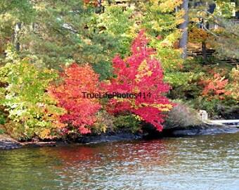 Fall Trees At Lake Muskoka