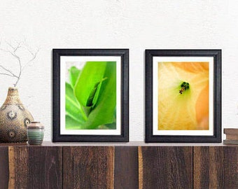 2 pack of 8x10 fine art prints, Bright colors, Starburst, Spring time flowers, macro, vibrant, bloom, wall art, Photography, home Decor