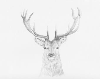 Highland Stag_- Original Pencil Drawing, wildlife art