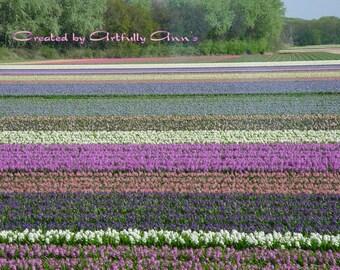 Keukenhof field of Tulips - Download - Art photography