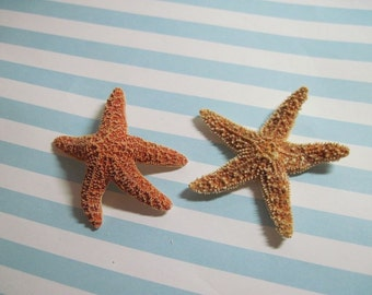 Mini Orange Sugar Starfish on Etsy 779