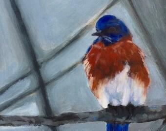 Bluebird on Blue, Bird Painting, Bird Art, bird watching