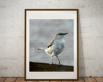 Mockingbird Print | Digital Download Decor | Nature Photography | Printable Bird | Animal Portrait | Wall Decor | NoFiltersPhotography