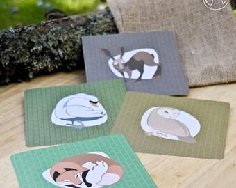 4 cartoline di animali europei (volpe, lepre, swan e barbagianni), illustrazione, stampa (12, 5x12, 5cm)