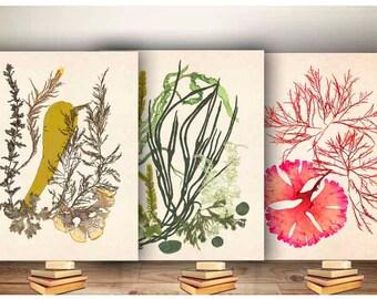 Seaweed Artwork Print, Pressed seaweed Art, Ocean art, Nautical art, Marine Wall Decor, Sea Grass Ocean, seaweed art, set 3 Seaweeds posters
