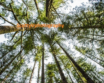 Save Oregon, Forest View, Forest Photography , Tree Art, Nature Decor, Forest Printable, Pines Photo, Tree Print, Forest Wall Art, Nature
