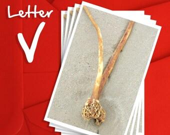 Alphabet Photography Letter V Choices, Alphabet Photography 6x4, 7x5 or 8x6 Prints