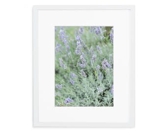 Lavender, Fine Art Photograph, Home Decor