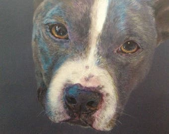 Custom Pet Portrait. Colored Pencil on toned paper. 11 x 14 inches.