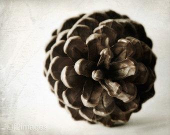 8x10 Pine Cone
